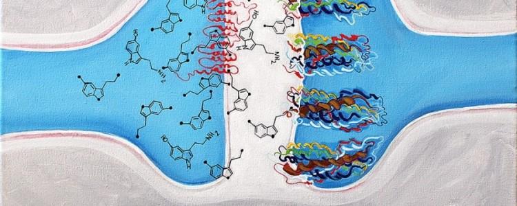 Серотонин: что это за гормон, его функции и способы повышения