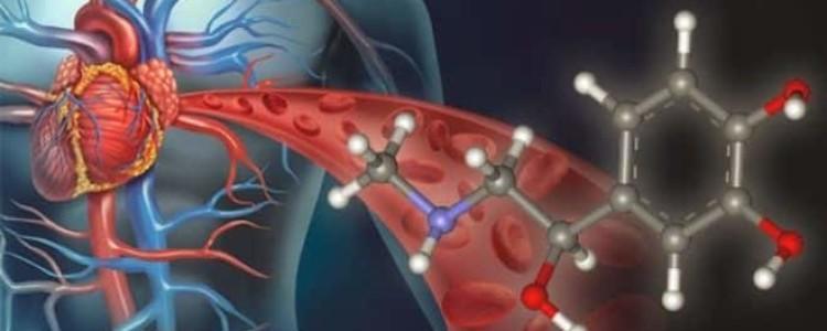 Выброс адреналина в кровь: симптомы, причины, последствия