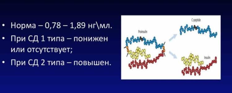 С-пептид: норма, расшифровка анализа, отклонения