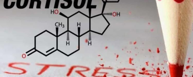 Анализ на кортизол — за что отвечает и как проверить уровень