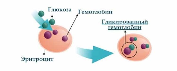 Гликированный гемоглобин: норма по возрату, что показывает анализ и причины отклонений