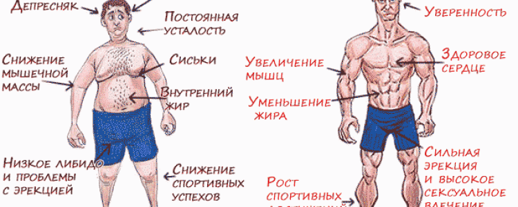 Повышение тестостерона у мужчин: препараты из аптеки, бады, рецепты, естественные способы