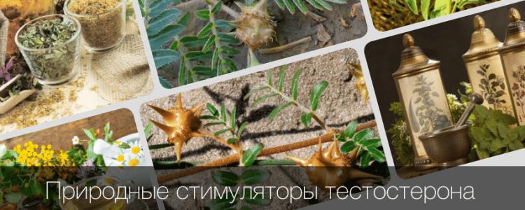 Травы повышающие тестостерон у мужчин — рецепты настоек