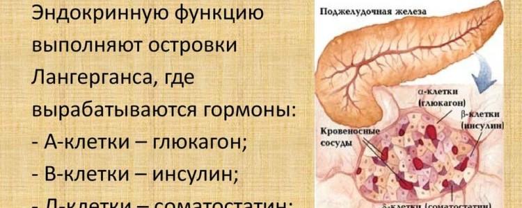 Гормоны поджелудочной железы: их функции, как они называются, биологическая роль, препараты