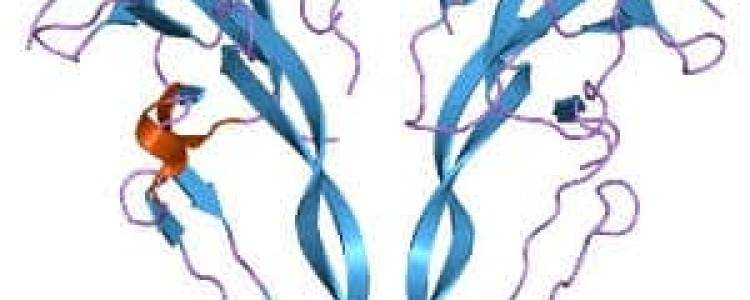 Ингибин В: за что отвечает гормон и нормы у женщин по дням цикла