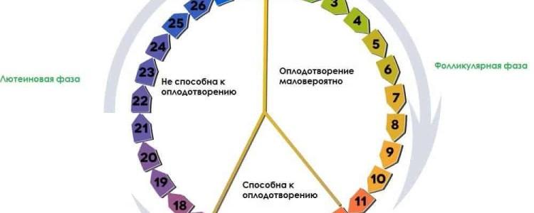 Фазы менструационного цикла у женщин по дням, схема