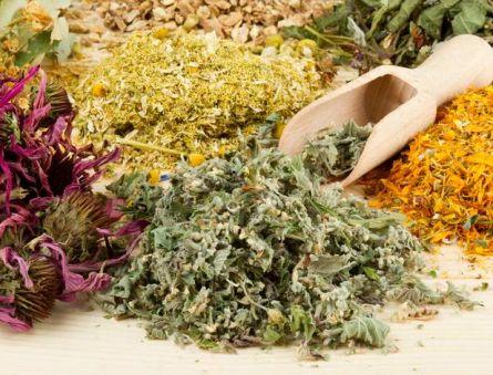 Эффективные травы для лечения щитовидной железы