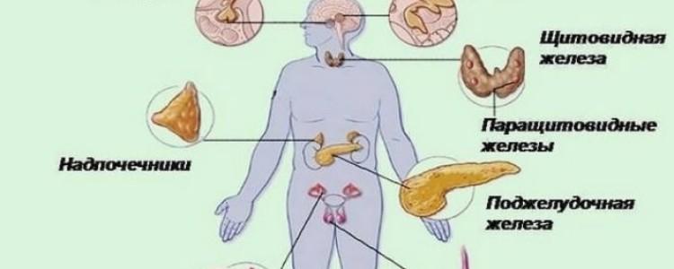 Список основных заболеваний эндокринной системы: причины, признаки, симптомы