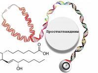 Простагландины — функции в организме, механизмы действия