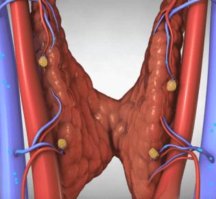 Почему в щитовидной железе усилен кровоток?