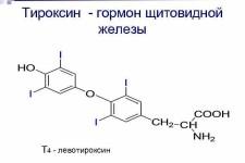 Гормон тироксин щитовидной железы: нормы, нехватка и переизбыток гормона