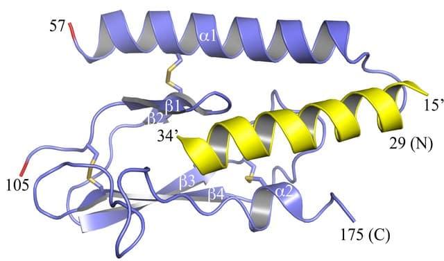Значение гормонов паращитовидной железы