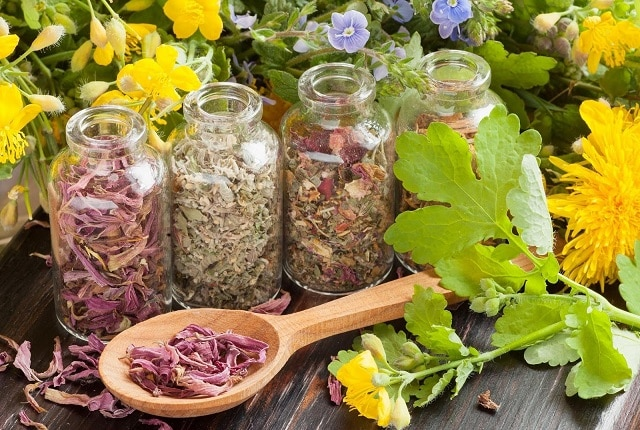 Травяные сборы при заболеваниях щитовидки