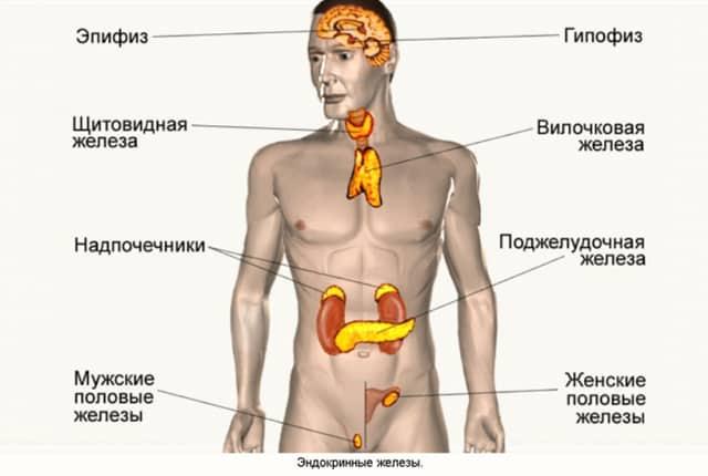 Нарушение функций органов эндокринной системы