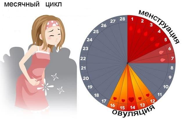Результат УЗИ не зависит от менструального цикла