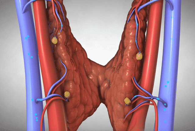 Почему в щитовидной железе усилен кровоток