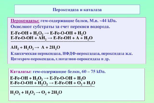 Пероксидаза