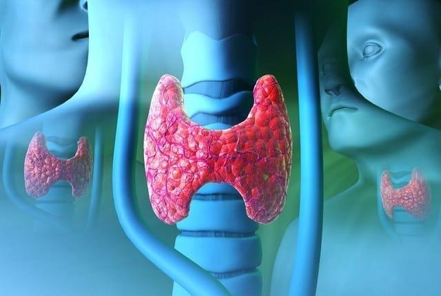 Узлы и кисты щитовидной железы