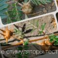 Травы повышающие тестостерон у мужчин